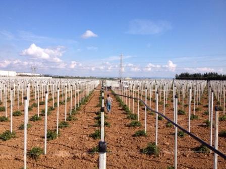 Azienda progettazione impianti irrigazione software di for Irrigazione vigneto