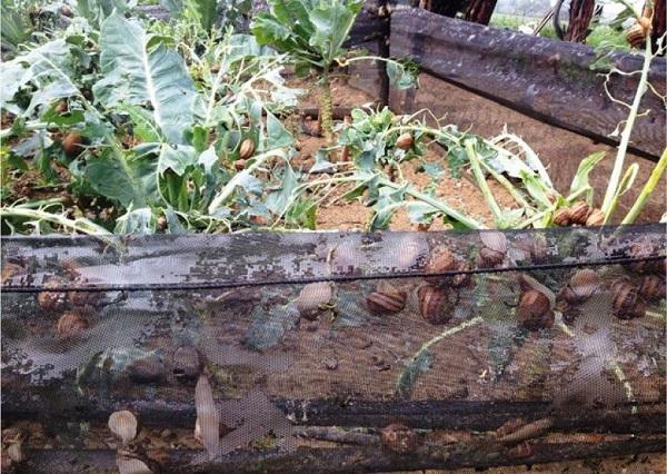 Impianto di irrigazione per elicicoltura progettazione for Irrigazione vigneto